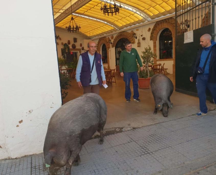 De visita para San Antonio Abad, Trigueros