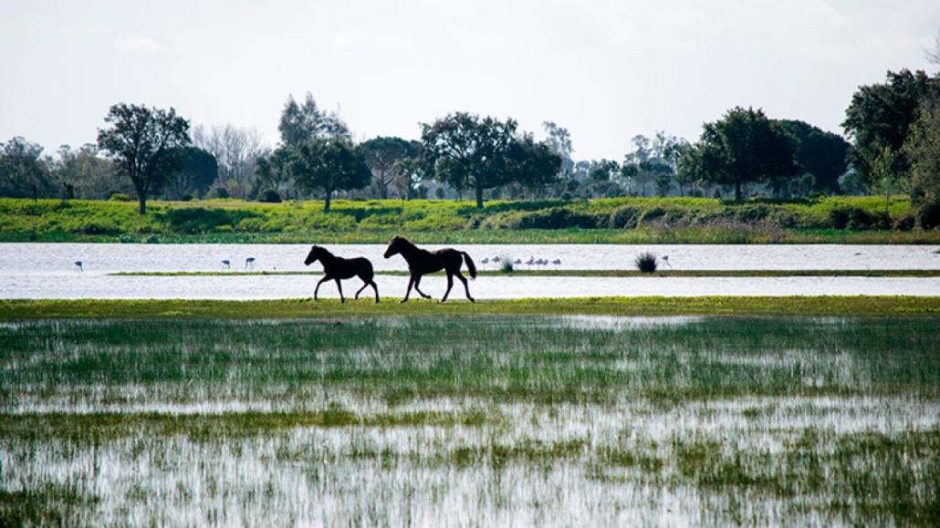 Caballos en Doñana