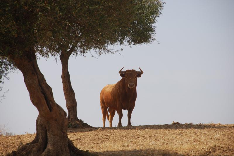 Toro de Millares