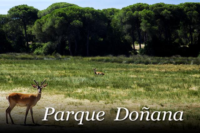 guia del parque donana Huelva