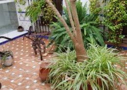 Nuestro propio patio andaluz