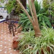 nuestro-patio-andaluz-en-hostal-ciudad-trigueros-min